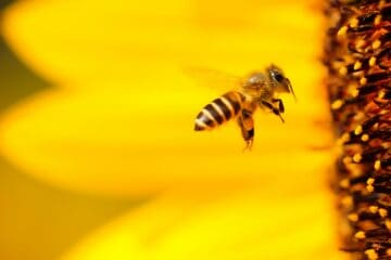 beekeeping how to make money fast