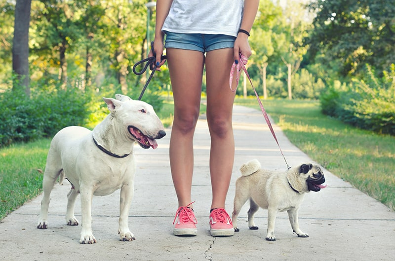 how can teens make money online - dog walking