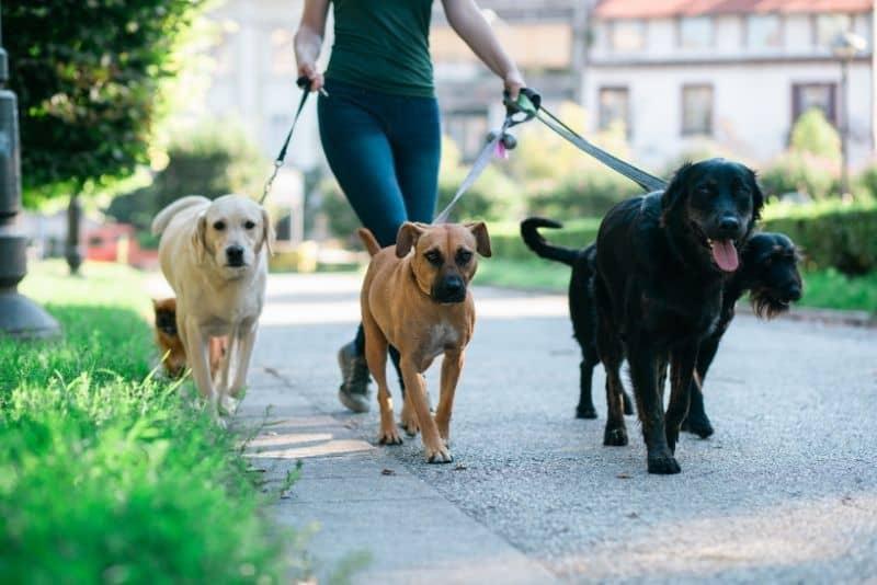 make money without a job dog walking